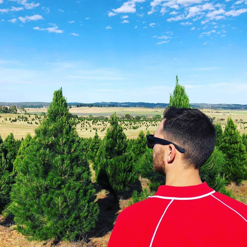 Top 5 Places Buy Real Christmas Trees Canberra Large Image