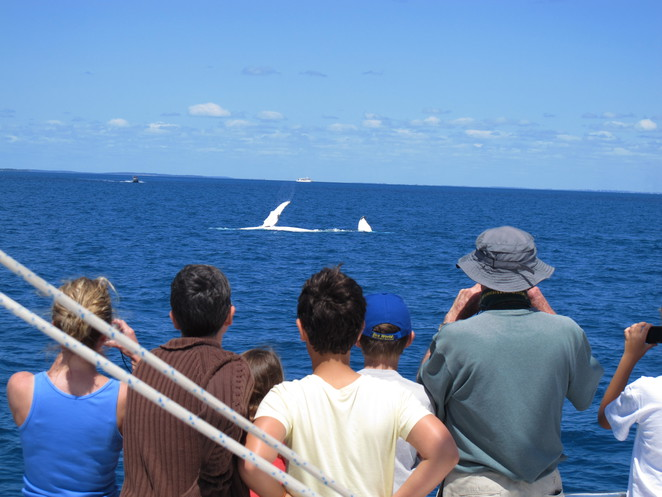 whale watching, hervey bay,
