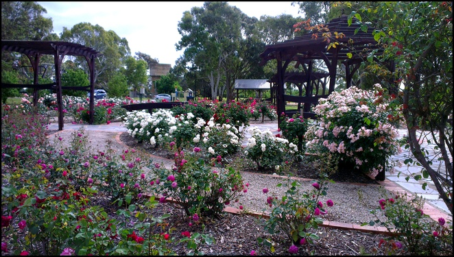 Willunga Rose Garden, Willunga Playground, Willunga Park, Free Kids Activities, School Holiday Activities, Adelaide Picnic Spots