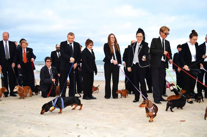 adelaide artist, photo shoot, henley beach, short legged dogs unite, andrew baines, dachshunds, city of charles sturt, sausage dogs