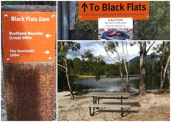 black flats dam, canberra, ACT, tidbinbilla nature reserve, bushwalks, easy walks, playtypus,