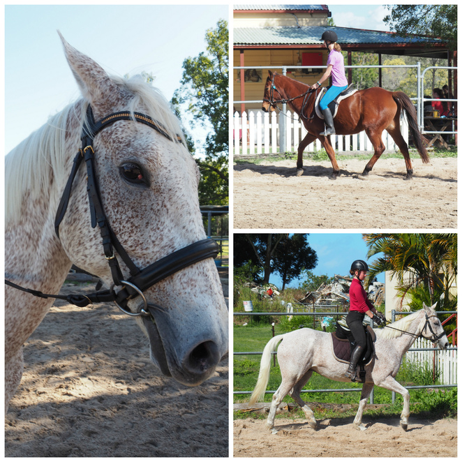 Bribie Island Road Saddle Club, horses, training