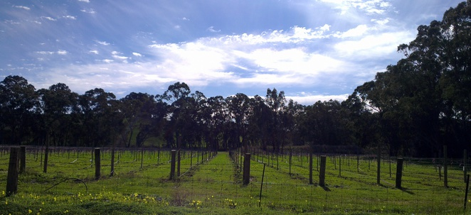 clare valley, wine region, wine tasting, vineyards