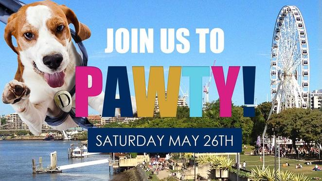 dogue, dog event, dog friendly, free, pet shop, bulimba, Brisbane, eastern suburbs, southern suburbs, grooming, pet grooming, dog grooming, Saturday, family, fun,