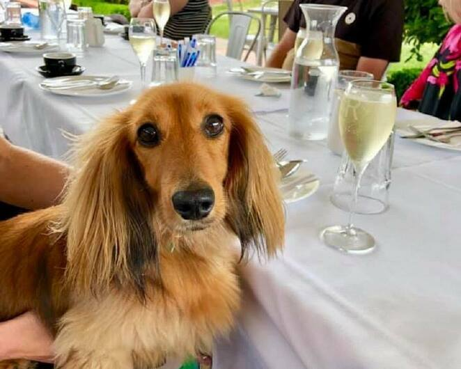 Gourmet Pawprints Paws and Pours High Tea