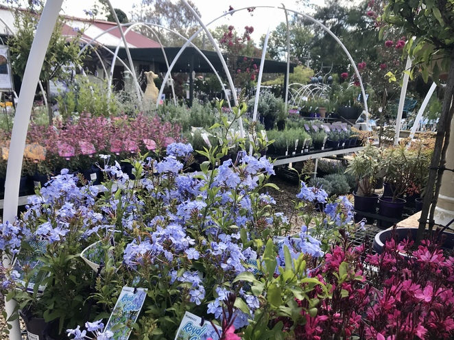 Heritage Nursery Yarralumla, Canberra garden centres, where to buy plants in Canberra, Canberra nursery, gardening in Canberra, best plants for Canberra