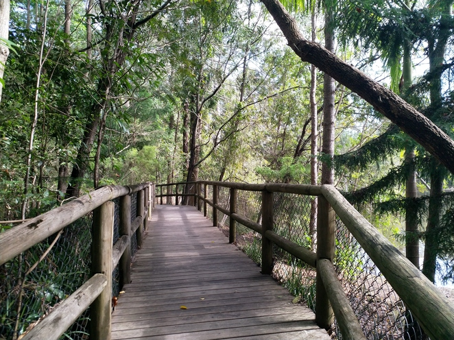 Boardwalk through Kumbartcho Sanctuary with glimpses of the reservoir through the trees (right side)