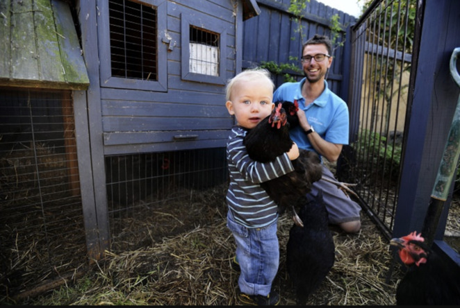 keeping chickens in your backyard