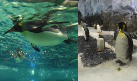 Penguins, SeaWorld,