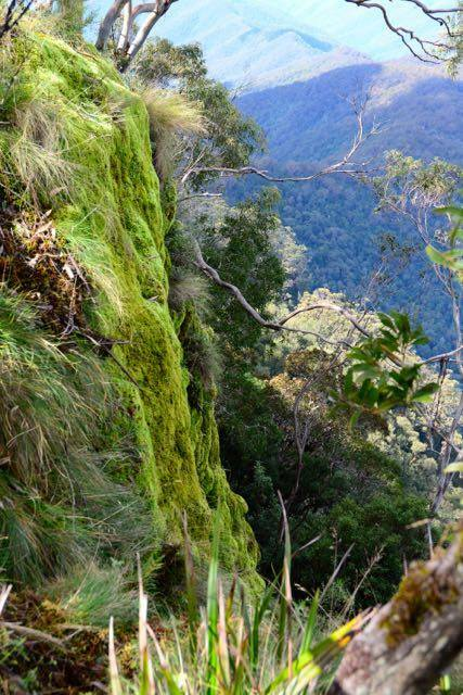 A mossy cliff at Point Lookout