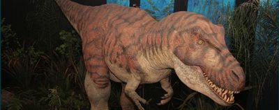 Image Courtesy of the Dinosaurs Alive website