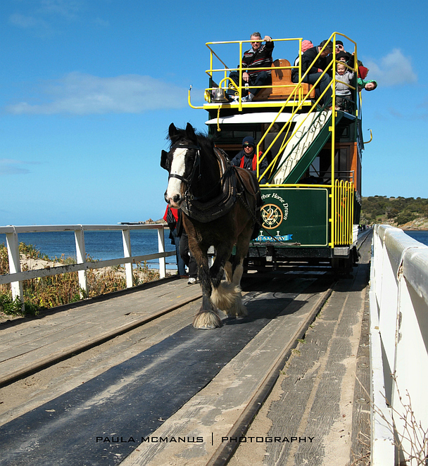 Victor Harbor horse drawn tram