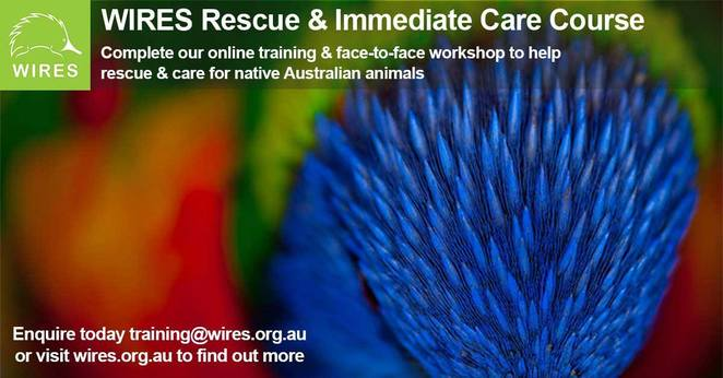 wires animal rescue, knit a pouch, orphaned joeys, kangaroos, wallabies, wildlife, wildlife rescue, knitting, donations, charity, fun things to do, commuity event, wildlife information
