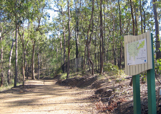 The Citriodora Trail is a wide and shady fire trail