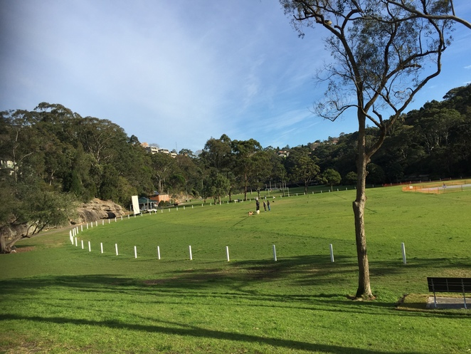 coffee, coffe van, cammeray, tunks park, northbridge, sports, boating, tea, muffin, brownie, toastie, outdoors, sports field, exercise, cafe carino, espresso