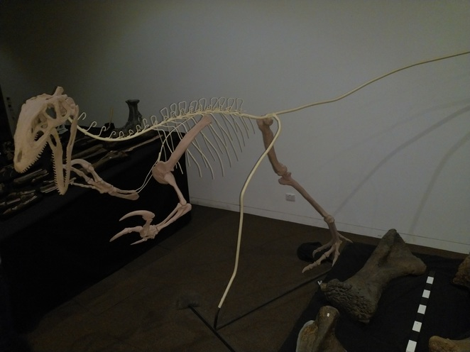 An incomplete dinosaur skeleton. Finding all the pieces requires a great deal of patience.