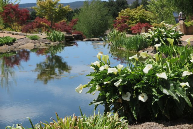 Mayfield garden, Japanese water garden, Oberon, NSW