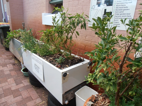Old fridges have also been used to plant vegies.