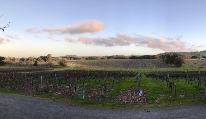 Outlook from MCW Cellar Door