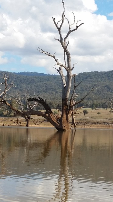 Reflections of lone trees at Lake Nillahcootie.
