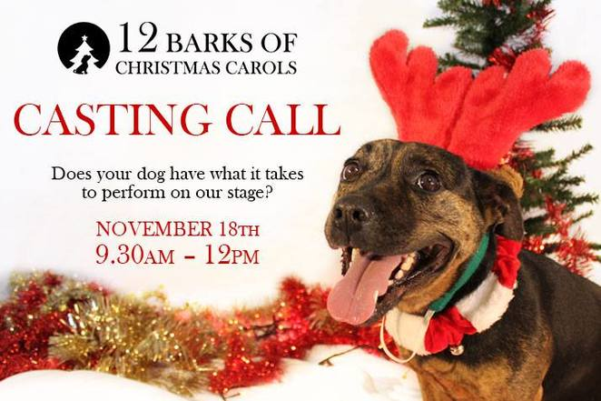 RSPCA Canberra, christmas events, dogs, canberra, 2017, 12 barks of christmas, casting call, glebe park, weston creek,