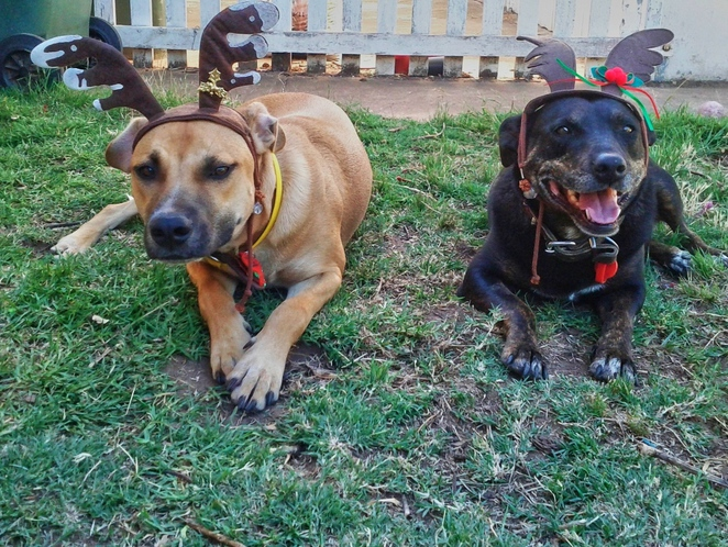 things to do, adelaide, free, festival, park, christmas, market, food, kids, dogs