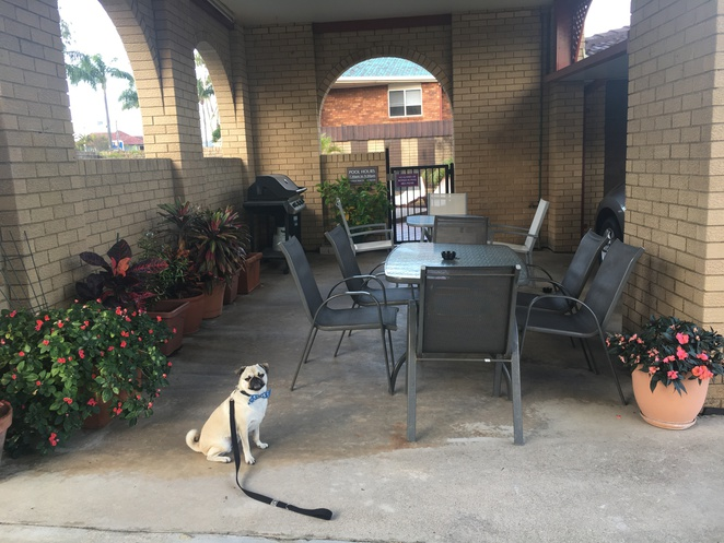 toreador motel, accomodation, dog friendly, free wifi, motel, hotel, air bnb, coffs harbour, new south wales, big banana, swimming pool, parking, travel, foxtel, dog friendly, pet friendly