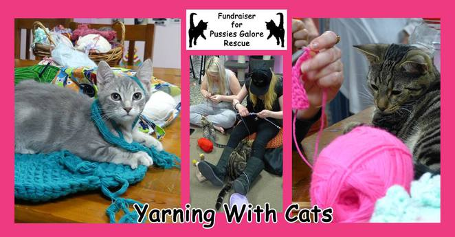 yarning, cats, kittens, cuddle, cafe, red, hill, brisbane, fundraiser
