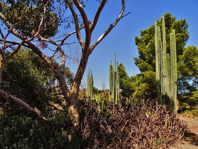 arizona cactus ranch, cactus ranch, cactus garden, joe lowey, windsor, in adelaide, port wakefield, cactus cafe