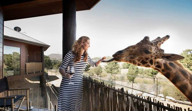 jamala wildlife lodge, canberra, national zoo and aquarium, ACT, gift vouchers, stay, present, gift idea, accommodation,