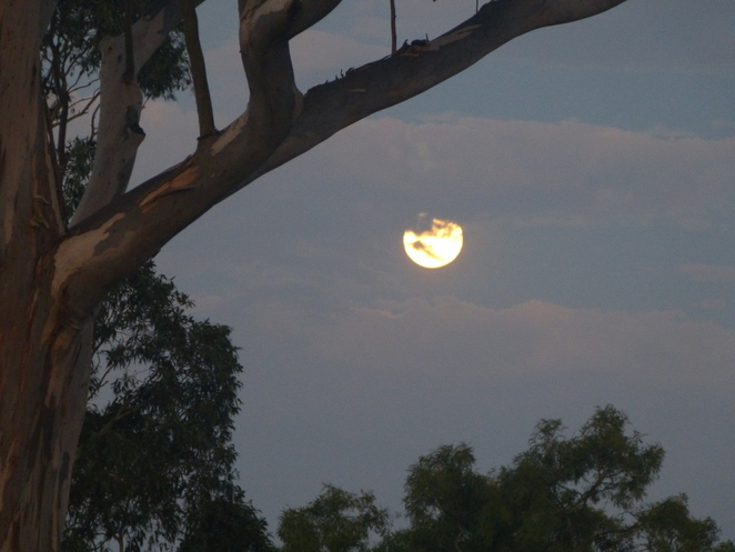 Moon framed by tree and clouds