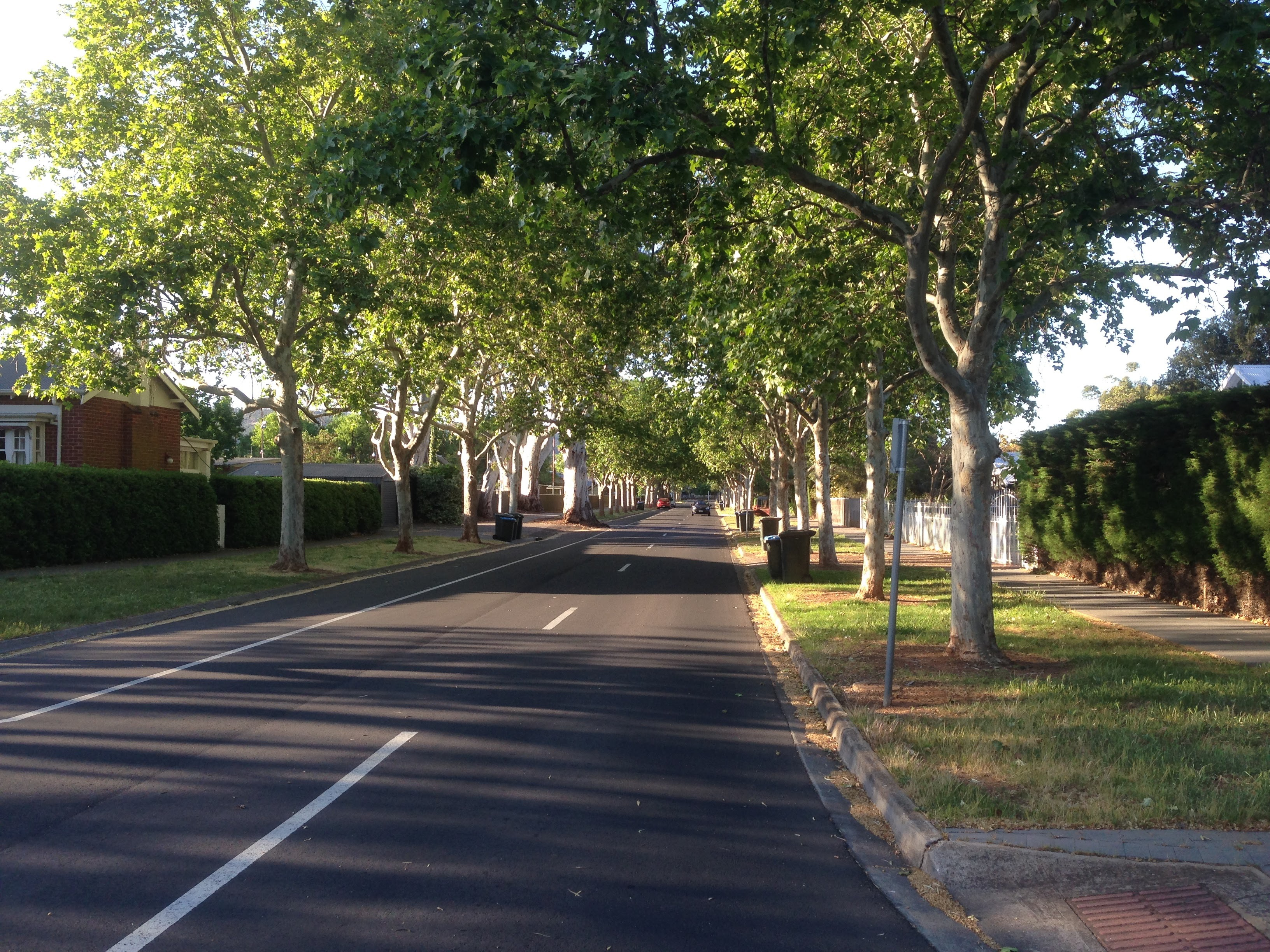 What 39 s in a name adelaide for Garden trees adelaide