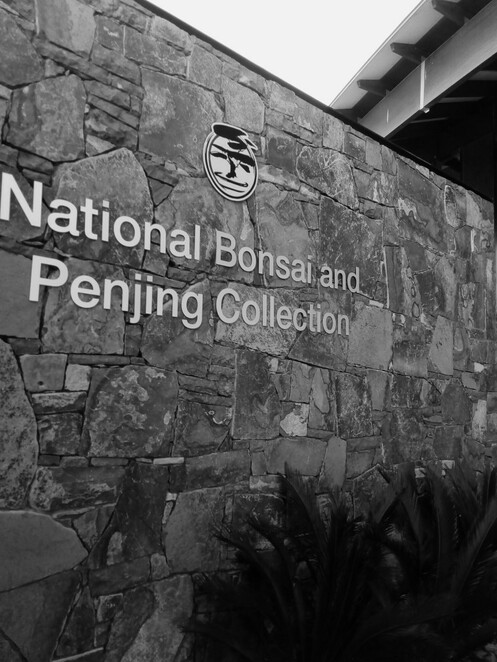 National Bonsai and Penjing Collection