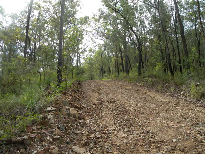 Part of the 7km driveway into the property