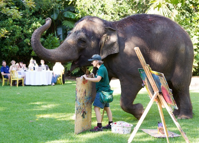 Perth Zoo, Spring, Events, Elephants, Nature, Wildlife, School Holidays