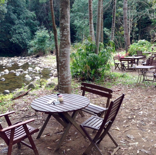 Rainforest Cafe, Gluten free and vegan, wedding venue, Mt Warning, organic food, healthy food, gluten free meals, Uki, subtropical rainforest, Lyrebird track, hike, Wollumbin Creek, Wollumbin National