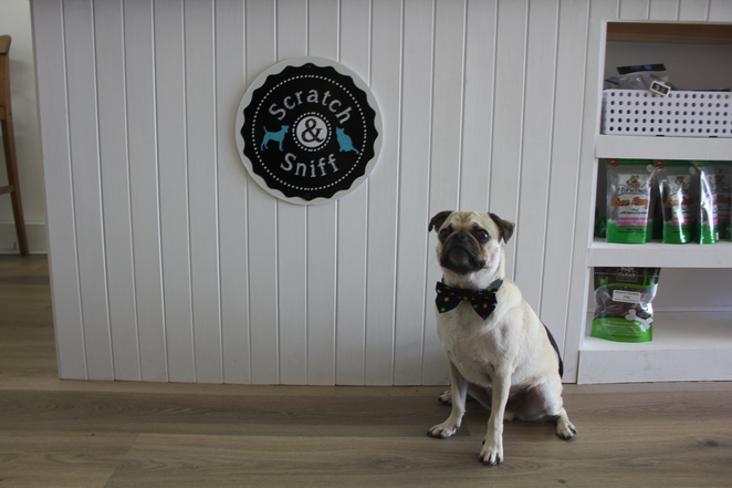 scratch and sniff pet supplies store, ballina, pet shop, boutique pet store, shopping, dog friendly, poochs pantry, pet treats, dog treats, healthy, new south wales, northern nsw, brisbane, local business, small business, art, road trip