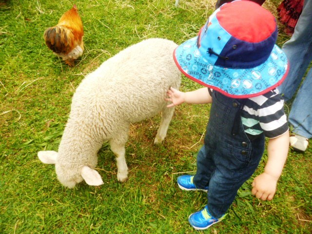 Spring fairs and fetes in Canberra