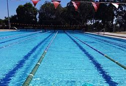 swimming, pines, pool, exercise