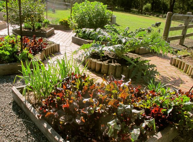 5 tips for growing tasty garden vegetables everywhere for Veggie patch layout