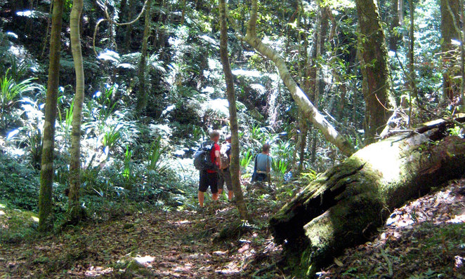 Albert creek circuit is a great walk in the Green Mountains section of Lamington National Park