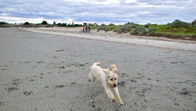Altona, dogs, beach, dog-friendly beaches, melbourne, seaholme