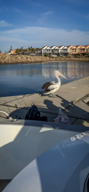 B.A. Boat Hire, Boat Hire Adelaide, Boat Hire South Australia, Boat Rental Adelaide, Boat Rental South Australia, Fishing Boat Hire, North Haven Boat Ramp