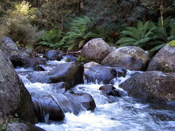 Barrington Tops. This image is from Wikimedia Commons (by DanF)