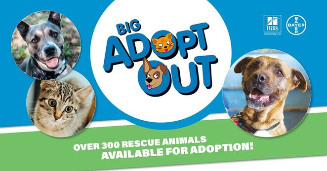 big adopt out 2019, community event, fun things to do, adopt a pet, pet lovers, rspca queensland, brisbane showgrounds, free pet adoption event, animal rescue, rescue organisations, adopt a cat, food vendors, vet advice, pet service stalls, rspca world for pets, hills pet nutrition, bayer, channel 7 queensland, hit105, saint bernard pet care