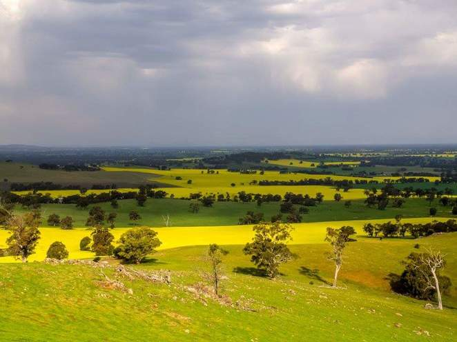 Canola fields, dookie hills, tallis winery, yorta yorta nation,
