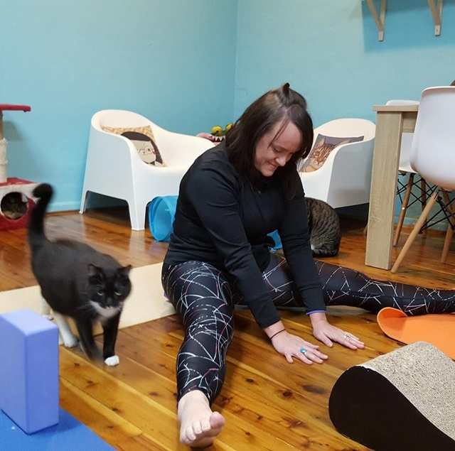 cats,and,yoga