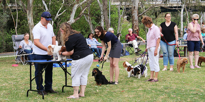 Cavalier, King, Charles, Spaniel, Capers, Funday, Events