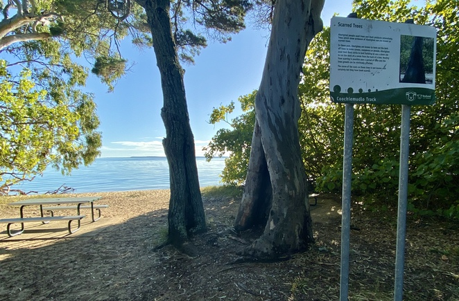 A scar tree with signage overlooking Morwong Beach