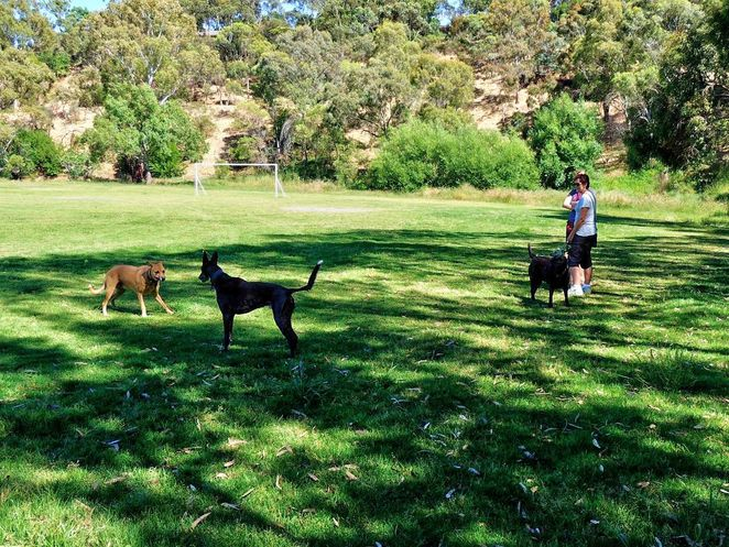 frank smith park, frank smith reserve, park and wetland, frank smith, coromandel valley, dog friendly, walking trails, dog heaven, wetlands, play games